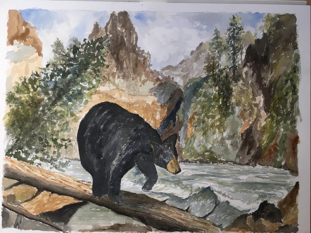 Black Bear Blue eyes crossing river
