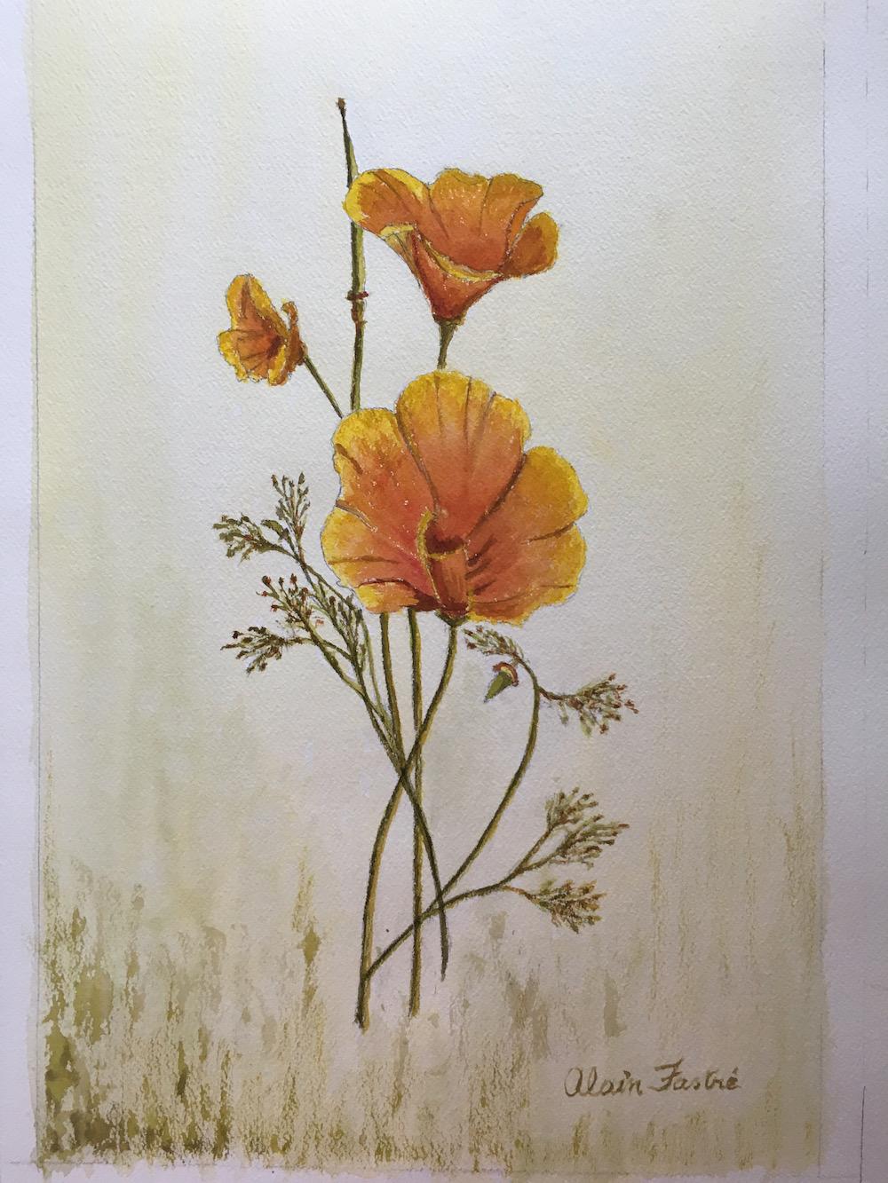California Poppy watercolor