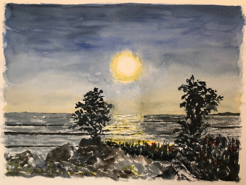 Half Moon Bay sunset between trees