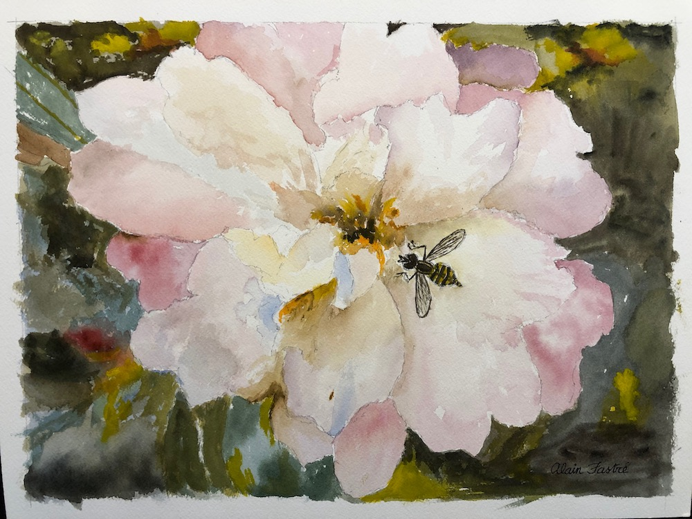 The Camelia and the bee