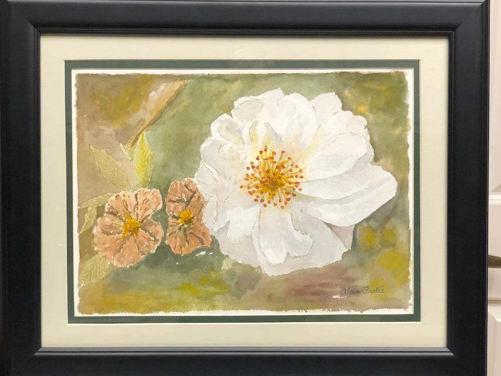 white rose 2 wild roses