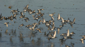 birds-at-nemours