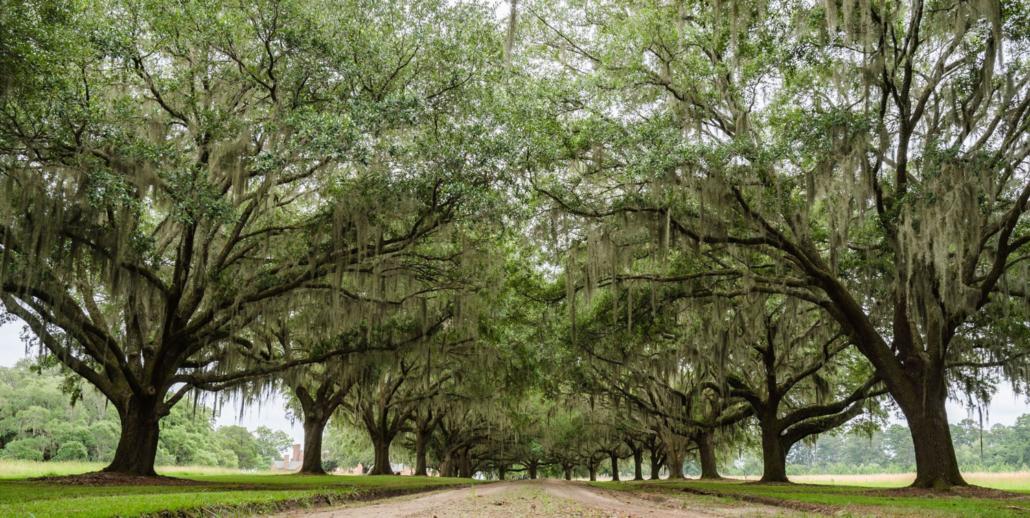avenue-of-oaks-susan-deloach-home-page