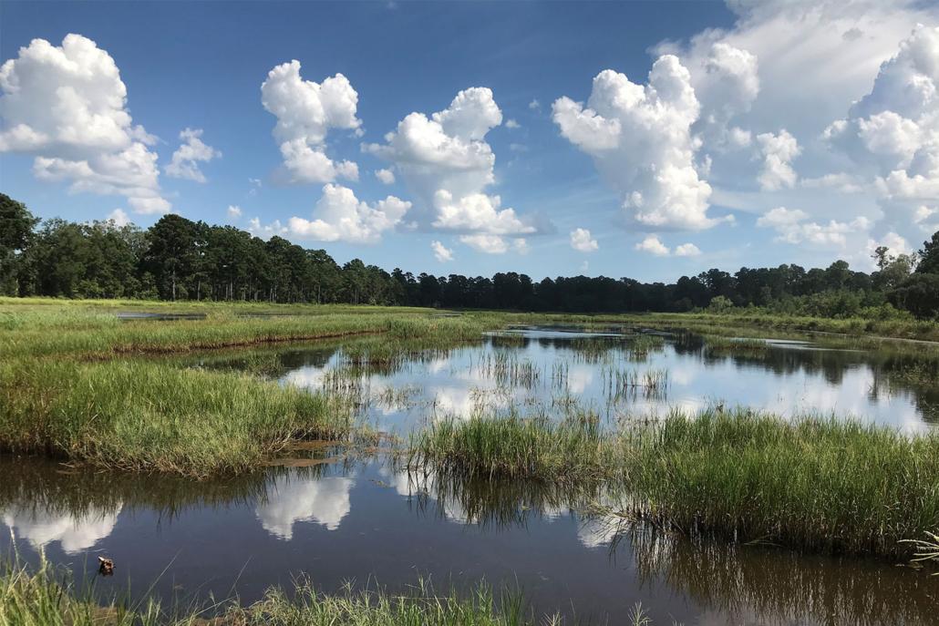 inland-rice-field5-1500x1000