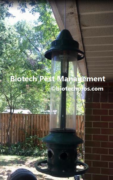 bird-feed-hang-in-the-yard