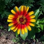 Artha Yoga flower4