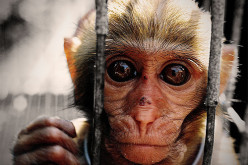 Cover Up Continues: Monkeys Injected With Vaccines Develop Autism