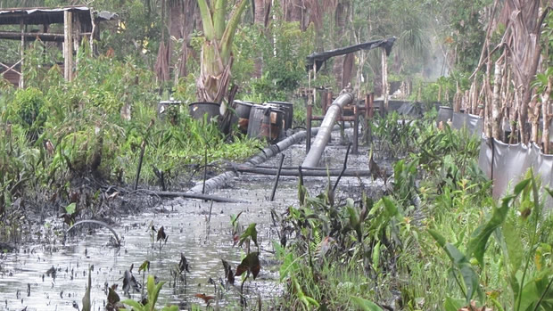 The half ass pipeline running from the centre of Pluspetrol's operations in the Pacaya Samiria National Reserve in Peru's Amazon. Photograph: Alianza Arkana/ACODECOSPAT