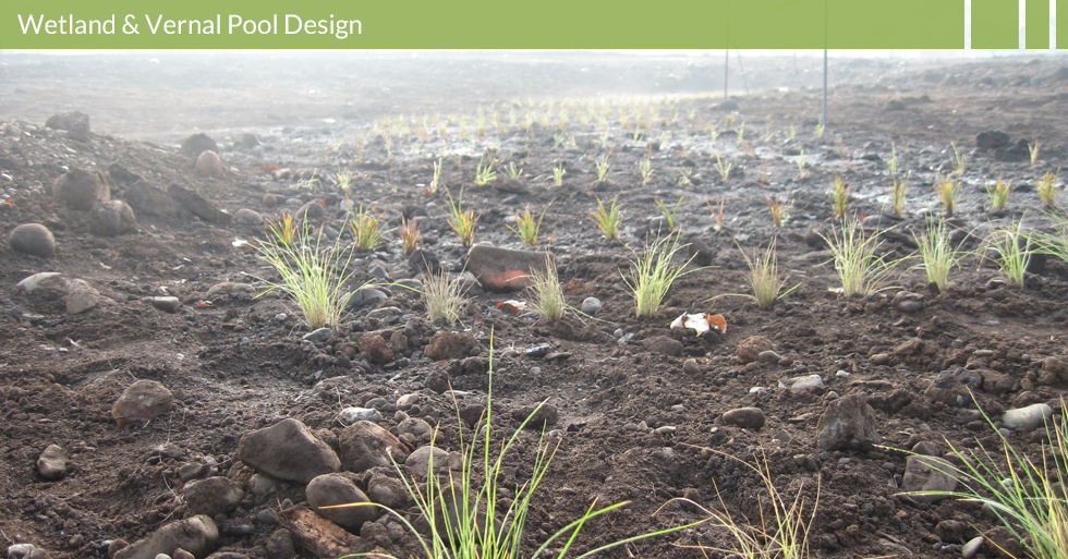 Melton Design Group, a landscape architecture firm, designed the bioswale plantings at Verbena Fields in Chico, CA.