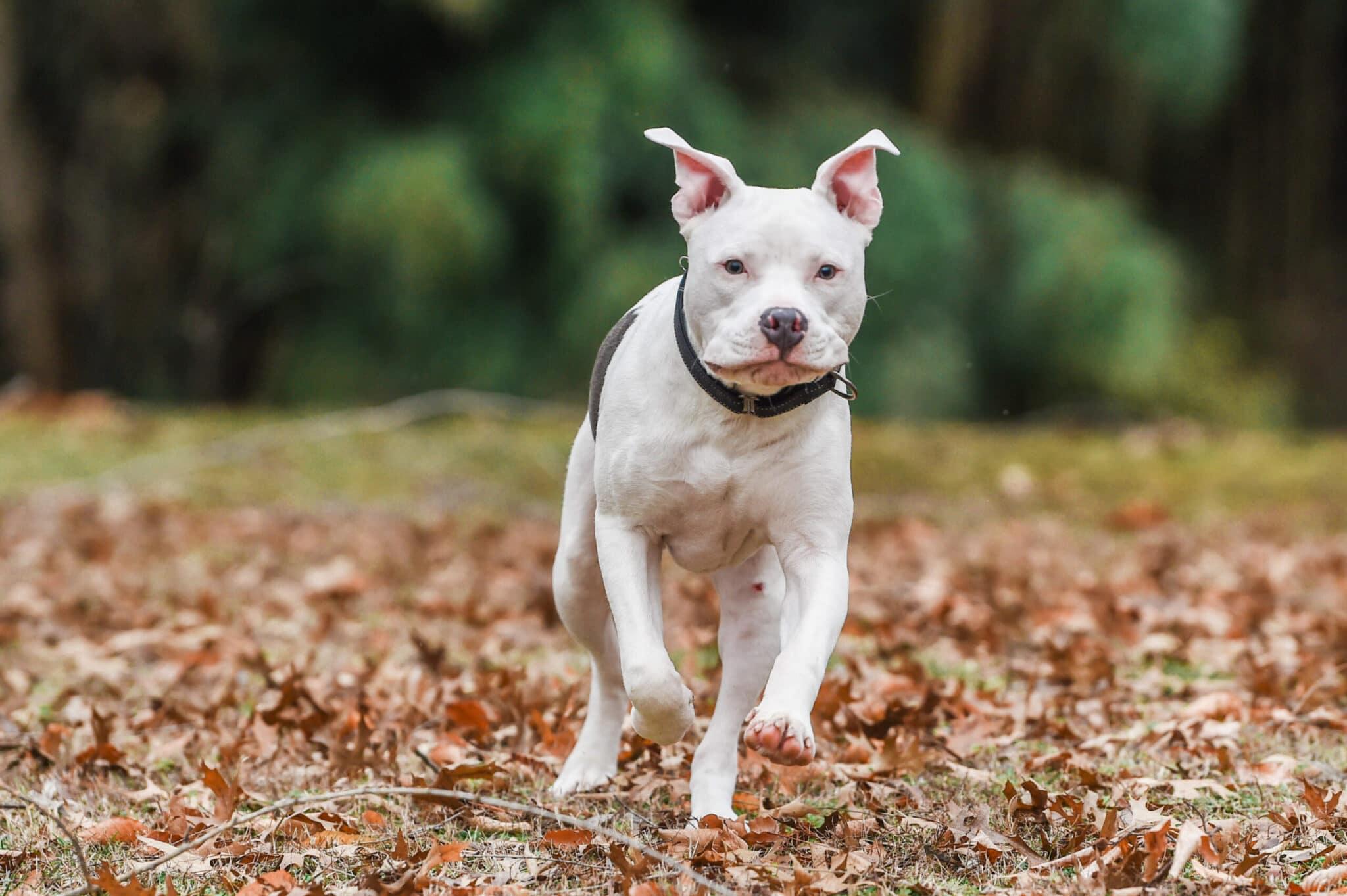 ez dog training kingsport tn
