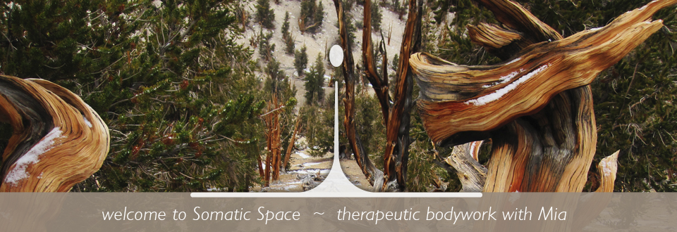 Welcome to Somatic Space