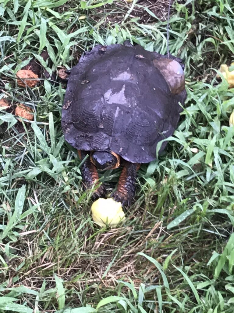 Takeout for Turtles