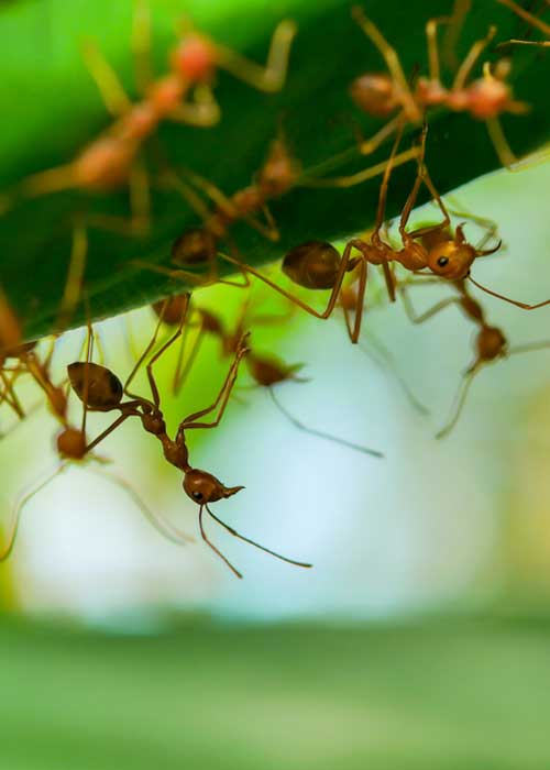 Rankin-Lawn-Care-pest control