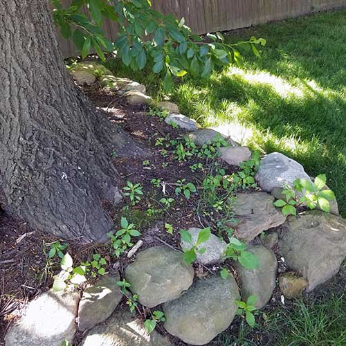 Rankin-Lawn-Care-weed-program