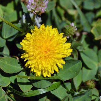 Rankin-Lawn-Care-weed control