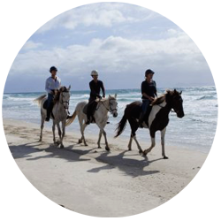 Parkiri Horse Rides Guided Tours