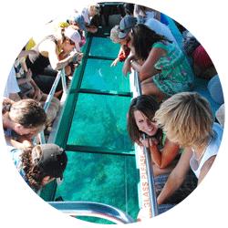 Discover Goat Island Marine Life
