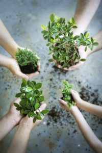 Planting trees for environmental sustainability