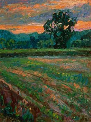 Soybean Field At Dusk