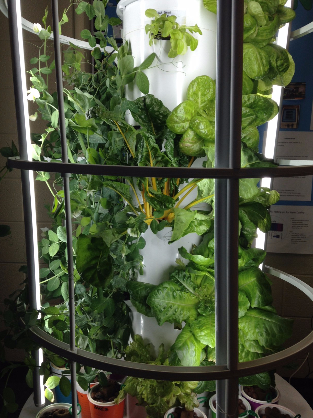 Photo of tower hydroponic system with variety of salad greens and vegetables at different stages of growth.