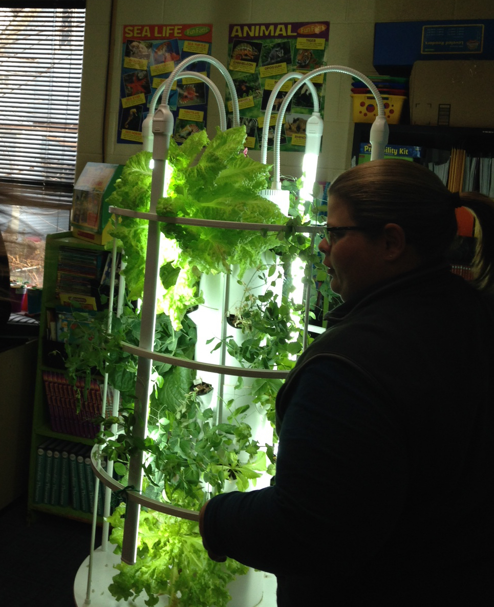 A middle school math teacher views the salad greens ready for harvest from the hydroponic tower system.