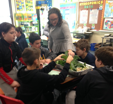 Students' teacher encourages them to visually examine their Bok Choy harvest and prepare for taste testing leaves.