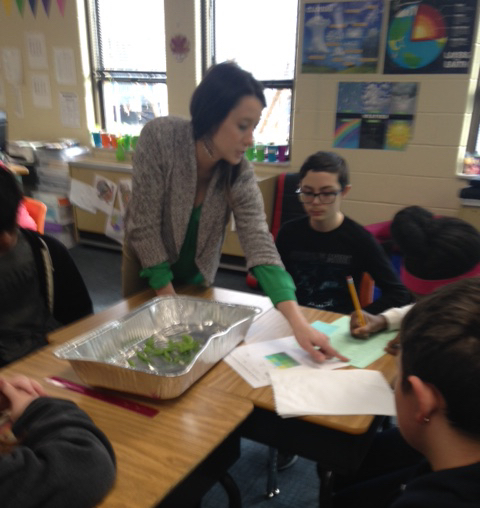 Teacher guides students from three classes in data collection for snap peas.