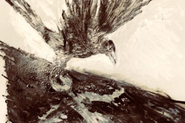 Crow Shadow