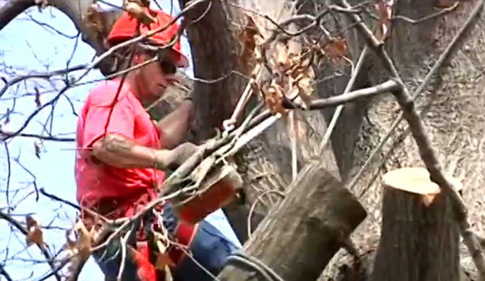Dead branch and tree removal