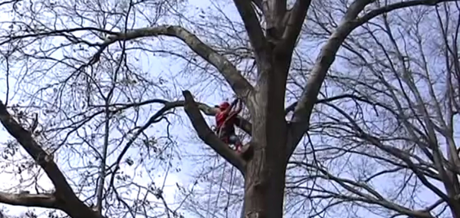 Columbia Tree Removal