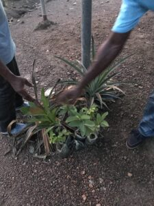 New seedlings waiting to be planted around the guest house
