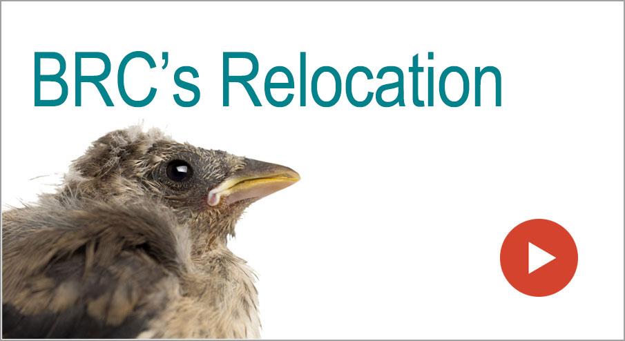 BRC's Relocation