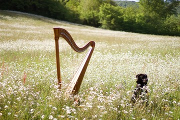 Harp Music & Pets!