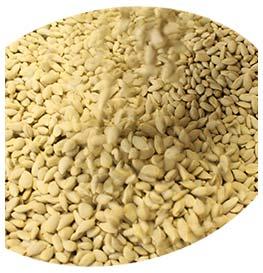 lyncitrusseed-seeds