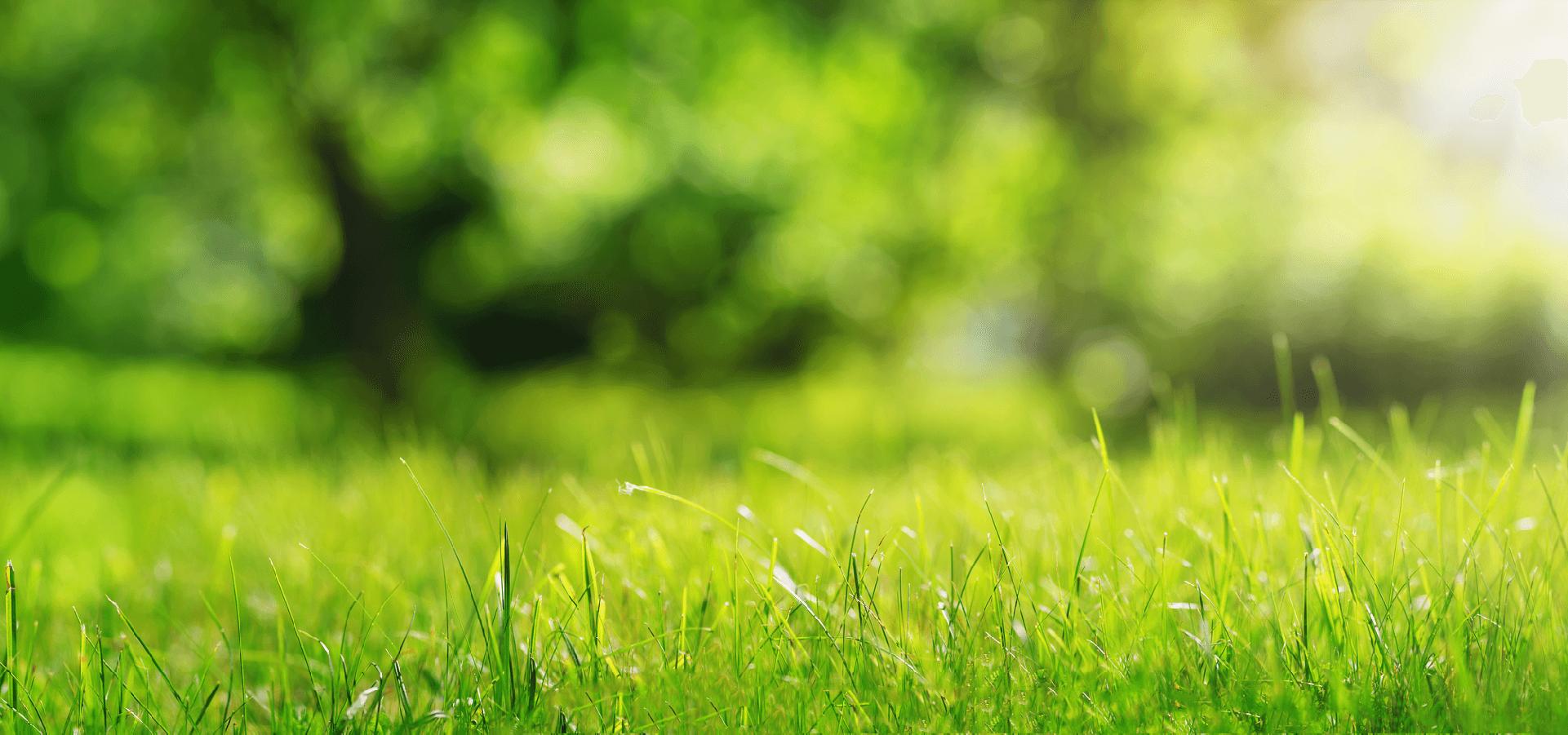 greengrass-life