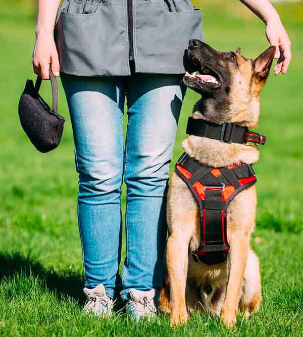 Easy Guide to Finding the Best Dog Training Program Near Me