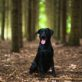 What About Calm Dogs? Which are the Calmest Dog Breeds for Your Home? (In 2020)