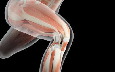 Las asombrosas funciones del sistema muscular
