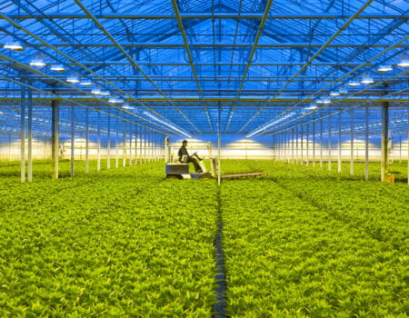 Greenhouses – A Modern Solution to Sustainable Food