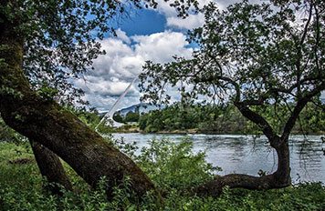 Saga at Rivers Bend