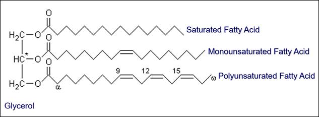 FFA Triglyceride Molecule