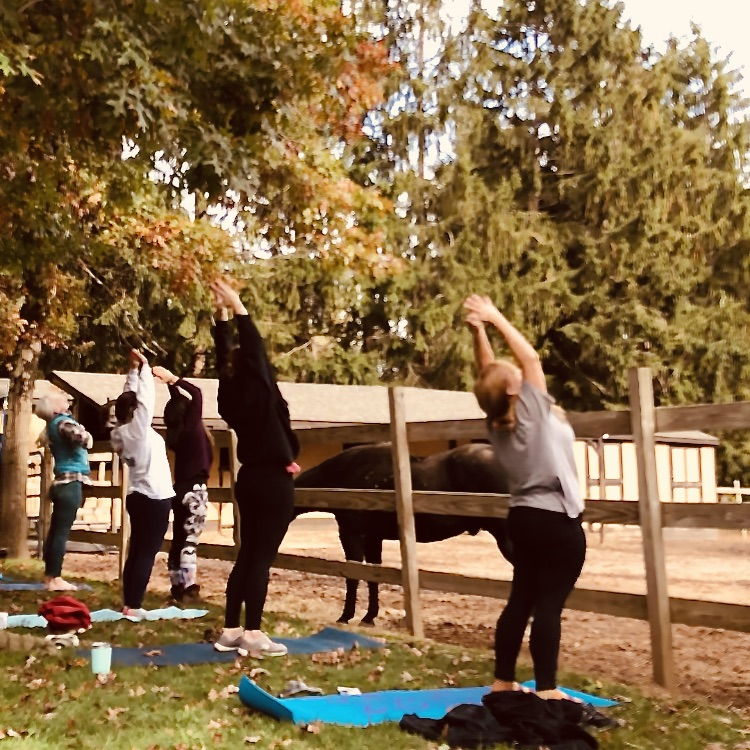 true north wellness jess morgan yoga with horses