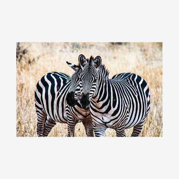 Zebra Love, Tanzania