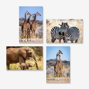 Safari Highlights