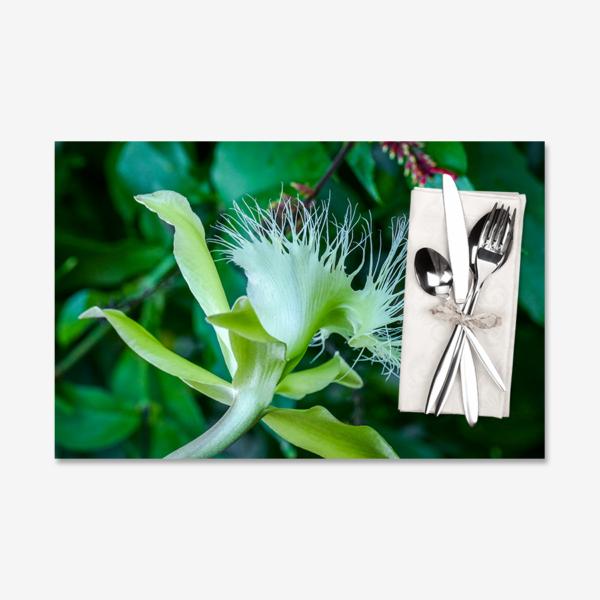 Digby Beaked Laelia Profile, Miami, Florida