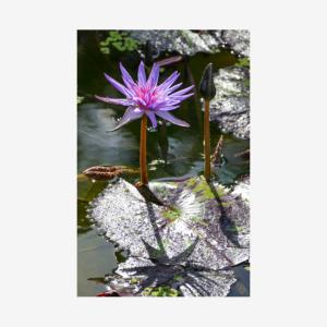 Fairchild Lotus, Miami, Florida