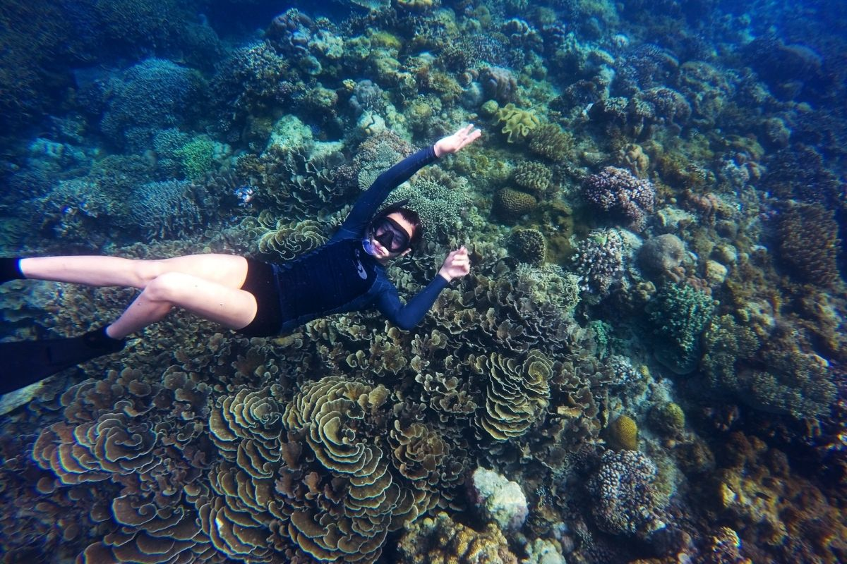 How to Snorkel Like an Expert