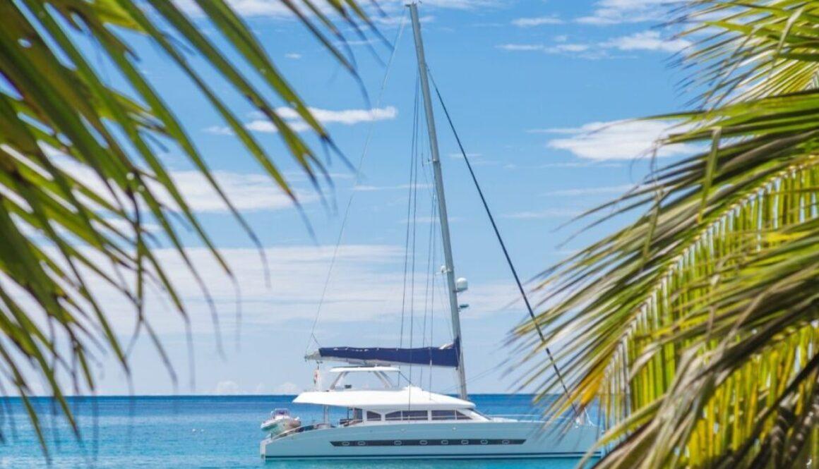 small boat roaming around near the coconut trees