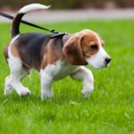 5 Big Benefits Of Using A Dog Walking Service