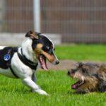 5 Ways To Keep The Dog Park Fun